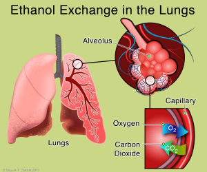 GERD-ethanol exchange in the lungs