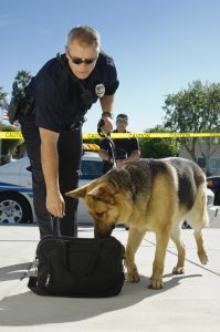 Police-dog-searching-luggage-199x300