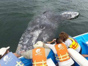 Whale-300x225